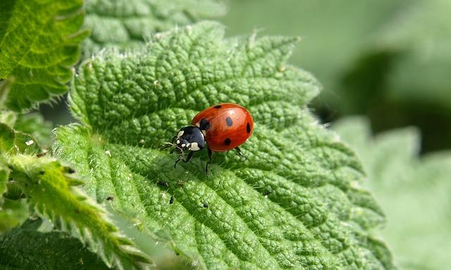 ladybug-349456_640