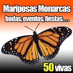 imagen 50 mariposa monarca