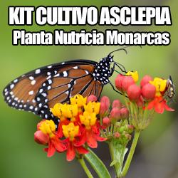 imagen asclepia mariposa monarca