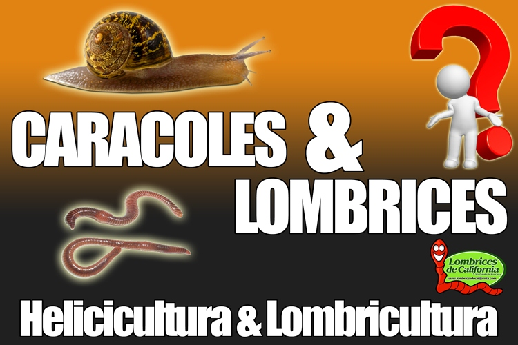 caracoles y lombrices